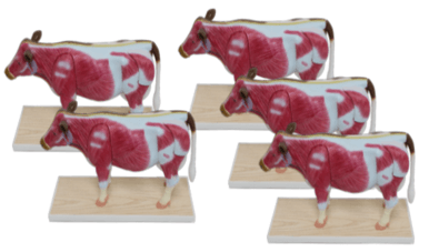 Sada malých kráv (5 kusov)