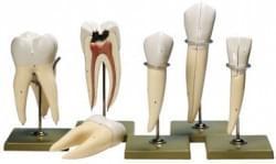 Zuby a čeľusť