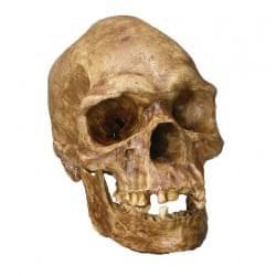 Fosílie a kosti človeka