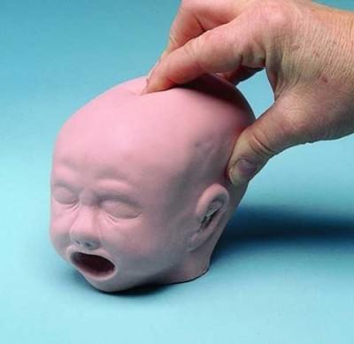 Model hlavy plodu