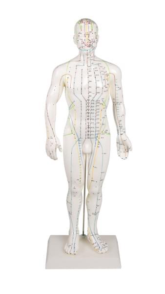 Mužská figurína pre akupunktúru, 50 cm