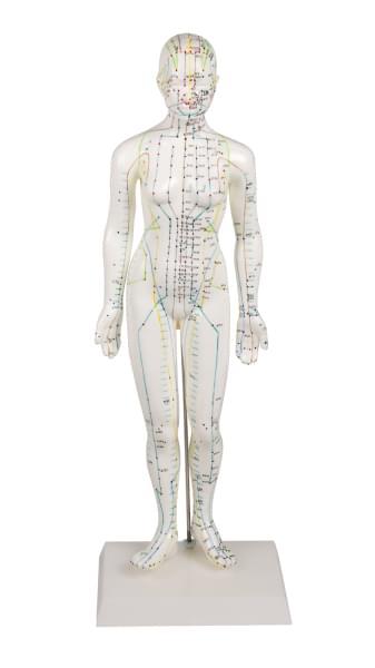 Ženská figurína pre akupunktúru