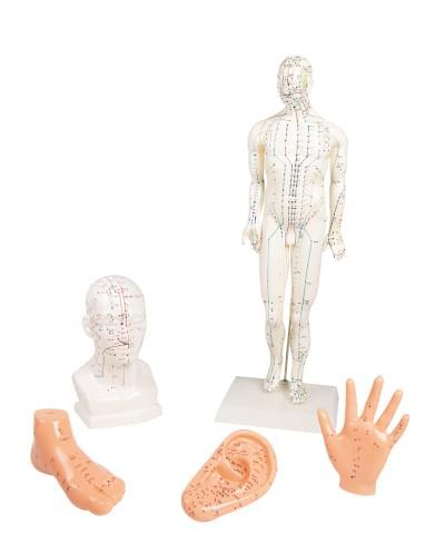 Sada modelov pre akupunktúru