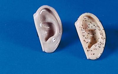 Modely uší pre akupunktúru