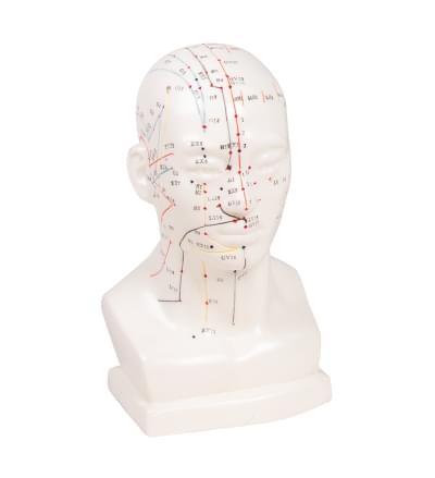 Model hlavy pre akupunktúru