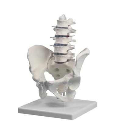 4040 - Bedrová chrbtica s panvou
