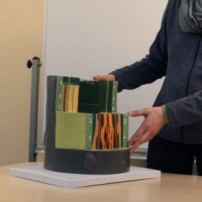 Model stonky dvojklíčnolistej rastliny