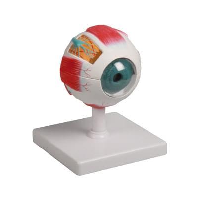 F210 - Model oka, 4× zväčšený, 6 častí