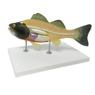 Model ryby