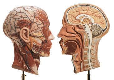 BS 9 - Polovica hlavy