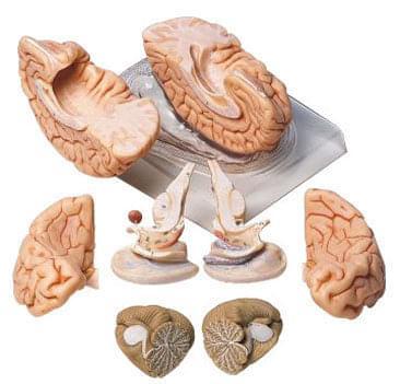 BS 20 - Mozog