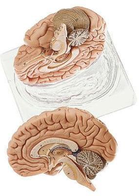 BS 21 - Mozog