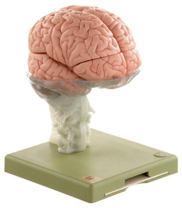 BS 25 - Mozog - 15 častí