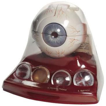 CS 22 - Model šedého očného zákalu