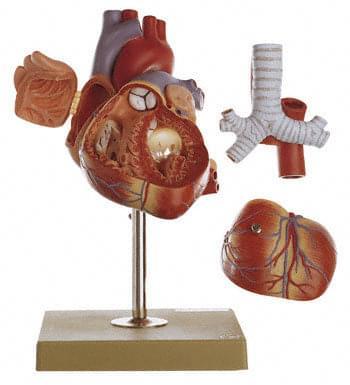 HS 6 - Srdce