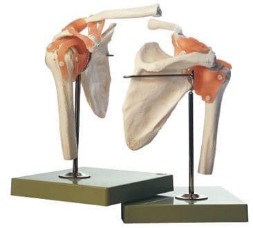 NS 53 - Praktický model ramenného kĺbu