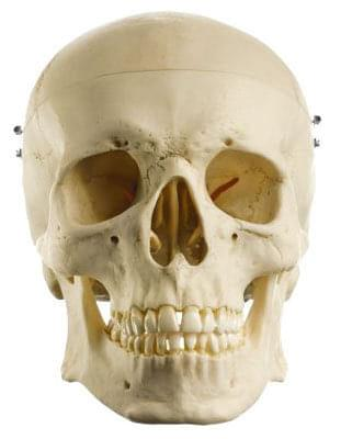 QS 7 - Umelá lebka človeka