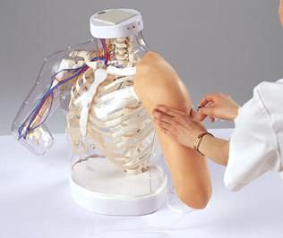 Model pre nácvik intramuskulárnej injekcie do nadlaktia
