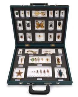 Kufor s 27 rôznymi vloženými exemplármi