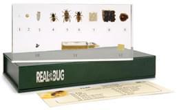 Život včely medonosnej - Apis cerana