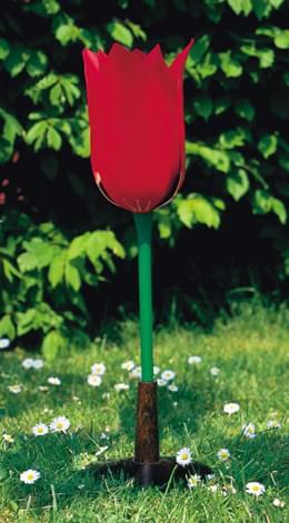 Tulipán záhradný (Tulipa gesneriana)