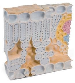 Blokový model struktury listu