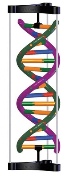 Model struktury dvojité šroubovice DNA