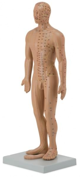 Model pre akupunktúru