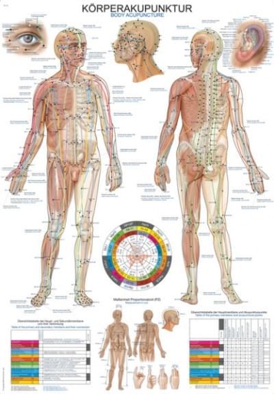 Nástenná schéma akupunktúrnych bodov, 70 × 100 cm