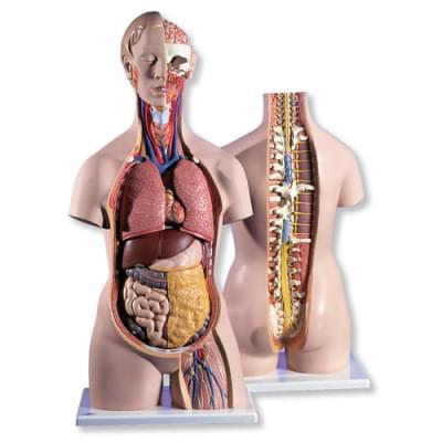 B19 - Klasické torzo s otvoreným krkom a otvoreným chrbtom, unisex, 18 častí