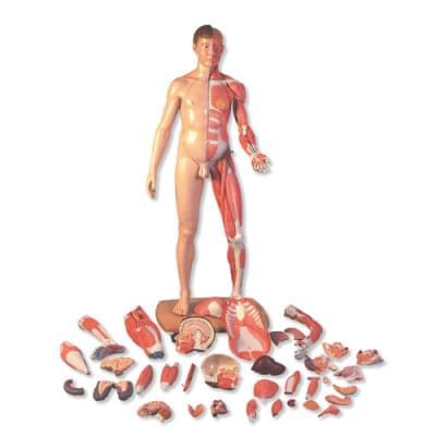 B52 - Postava so svalmi v životnej veľkosti, ázijské rysy, dvojaké pohlavie, 39 častí