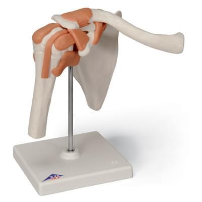 A80 - Funkčný model ramenného kĺbu