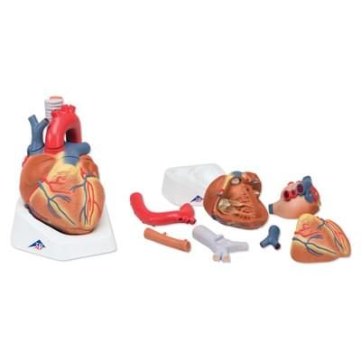 VD253 - Model srdca, 7 častí