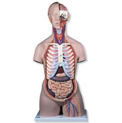 B17 - Klasické torzo s otvoreným chrbtom, unisex, 21 častí