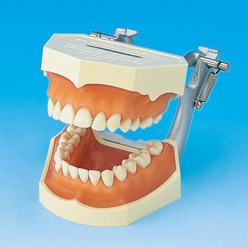 Model s odnímateľnými zubami (ďasno z ružového silikónu)