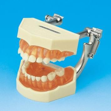 Model s odnímateľnými zubami - mliečny chrup (ďasno z transparentného ružového silikónu)