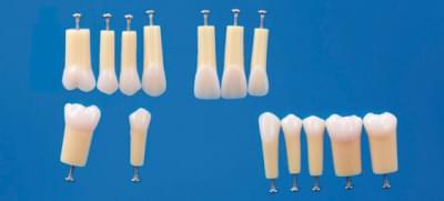Dvojvrstvové modely zubov A20A-200 (sada 14 zubov)
