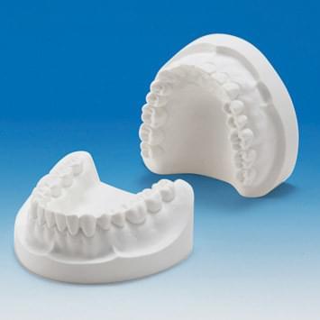 Sadrový model čeľustí (32 zubov) PRO2001-UL-PL-32