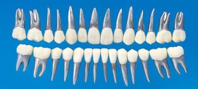 Anatomický model zubu B9-500 (sada 28 zubov)
