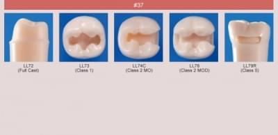 Model zubu pre prípravu piliera mostíka a čistenie zubu pred výplňou (zub č. 37)