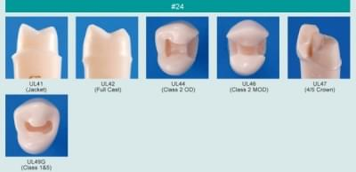 Model zubu pre prípravu piliera mostíka a čistenie zubu pred výplňou (zub č. 24)