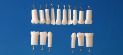 Model mliečneho zubu s jednoduchým koreňom (zub č. 64)