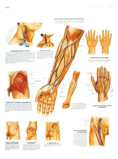 VR1359L - Klinicky dôležité cievne a nervové cesty