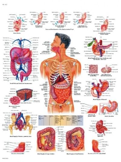 VR1422L - Gastrointestinálny systém
