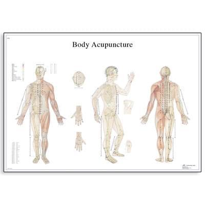 VR1820L - Telová akupunktúra