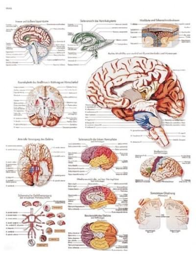 VR1615L - Ľudský mozog