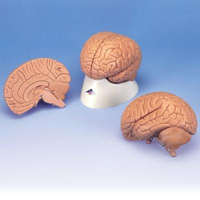 C15 / 1 - Úvodný model mozgu, 2 časti