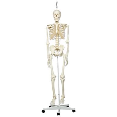 A10 / 1 - Model ľudskej kostry Stan - na závesnom stojane s kolieskami