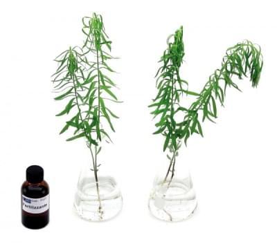 5669 - Sada pre ukážku absorpcie minerálnych solí v rastlinách