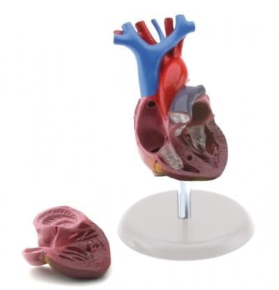 GD0322 – Srdce